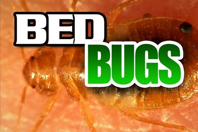 Bed Bugs_-47114638407286491