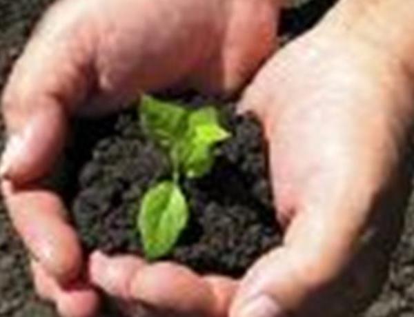Tech Talk-Gardening Apps_1454135868539619729