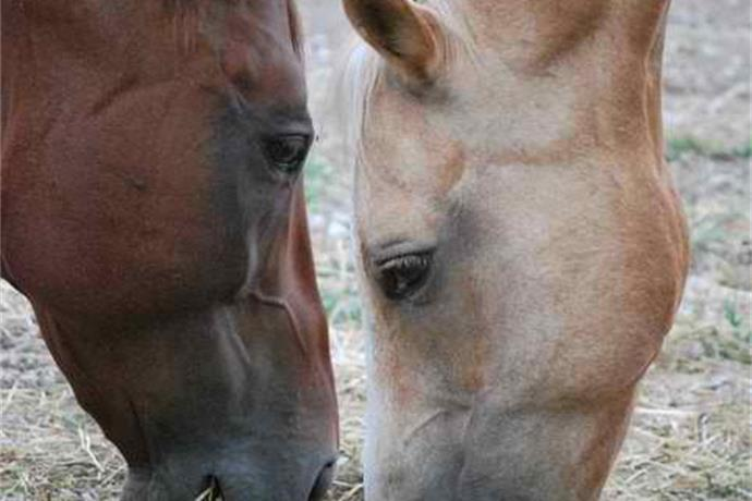Peacefield Equine Sanctuary Helps Horses in Need_2753586832055616240