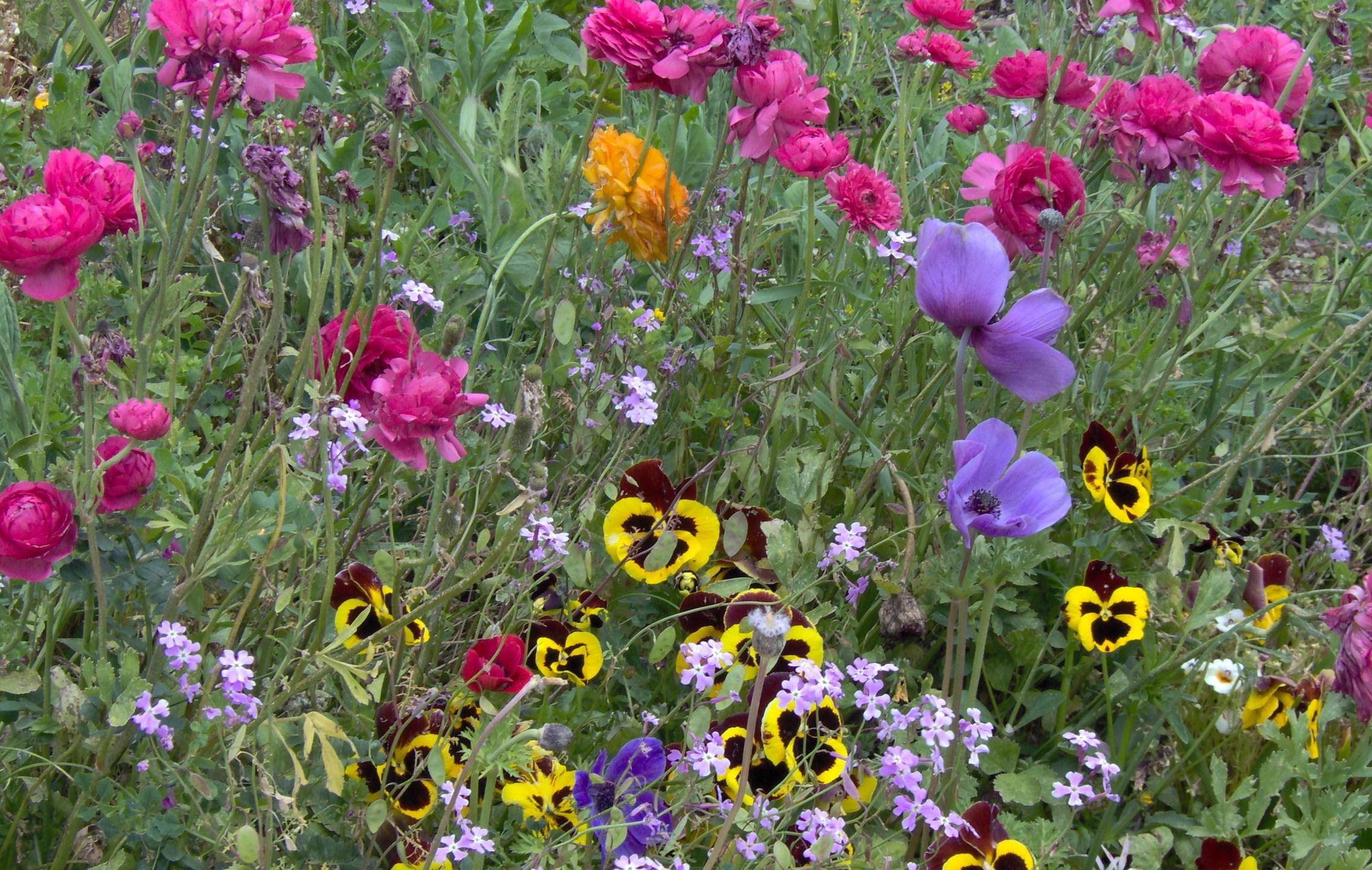 PikiWiki_Israel_5486_Plants_of_Israel_1465678646177.JPG