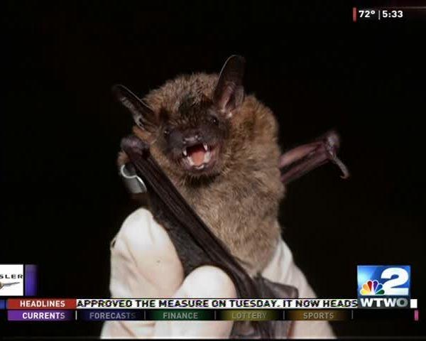 Bats at Sarah Scott_52090223-159532