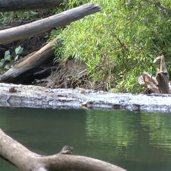 otter creek 1_1469678920610.jpg