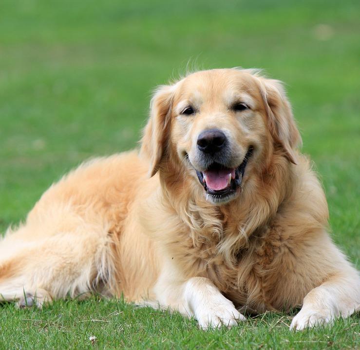 Dog 4_1476319050526.jpg