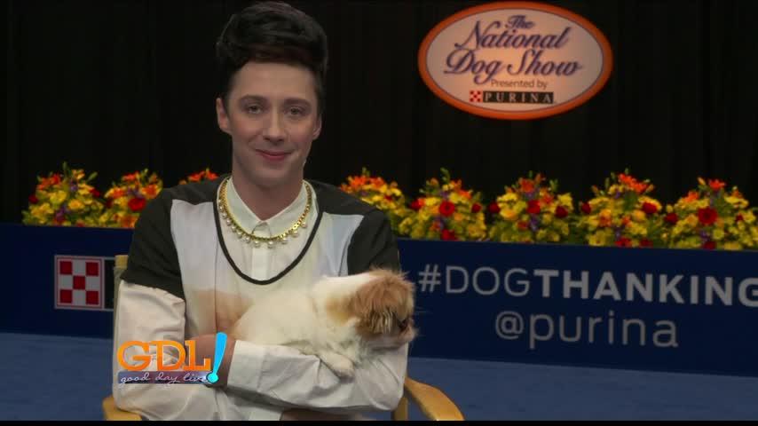 Dog Show 11-21-16