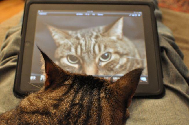 cat-using-ipad.jpg.653x0_q80_crop-smart_1483029388142.jpg