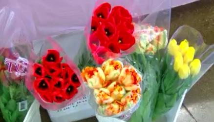 tulips_1493241038791.jpg