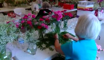 pink carnations_1494533380517.jpg