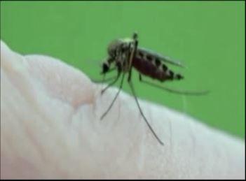 mosquito_1498160651043.JPG