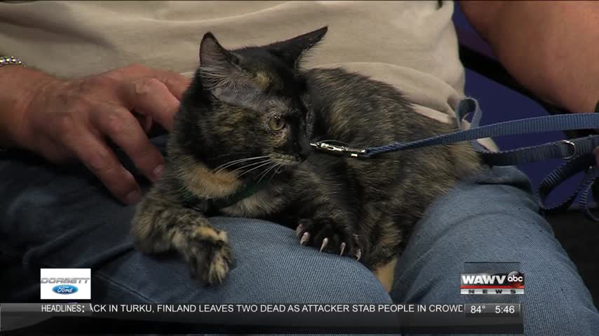 Effingham Clear the Shelters 8-18-17