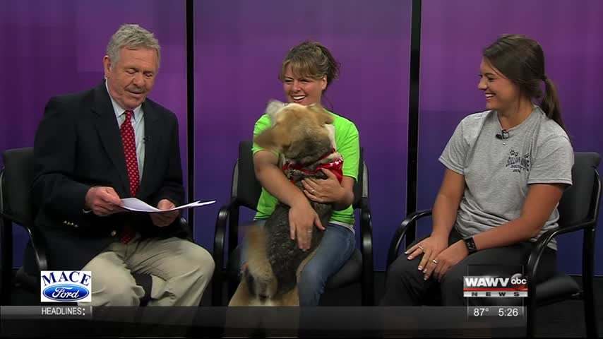 Petsmart Pet Adoption 9-14-17