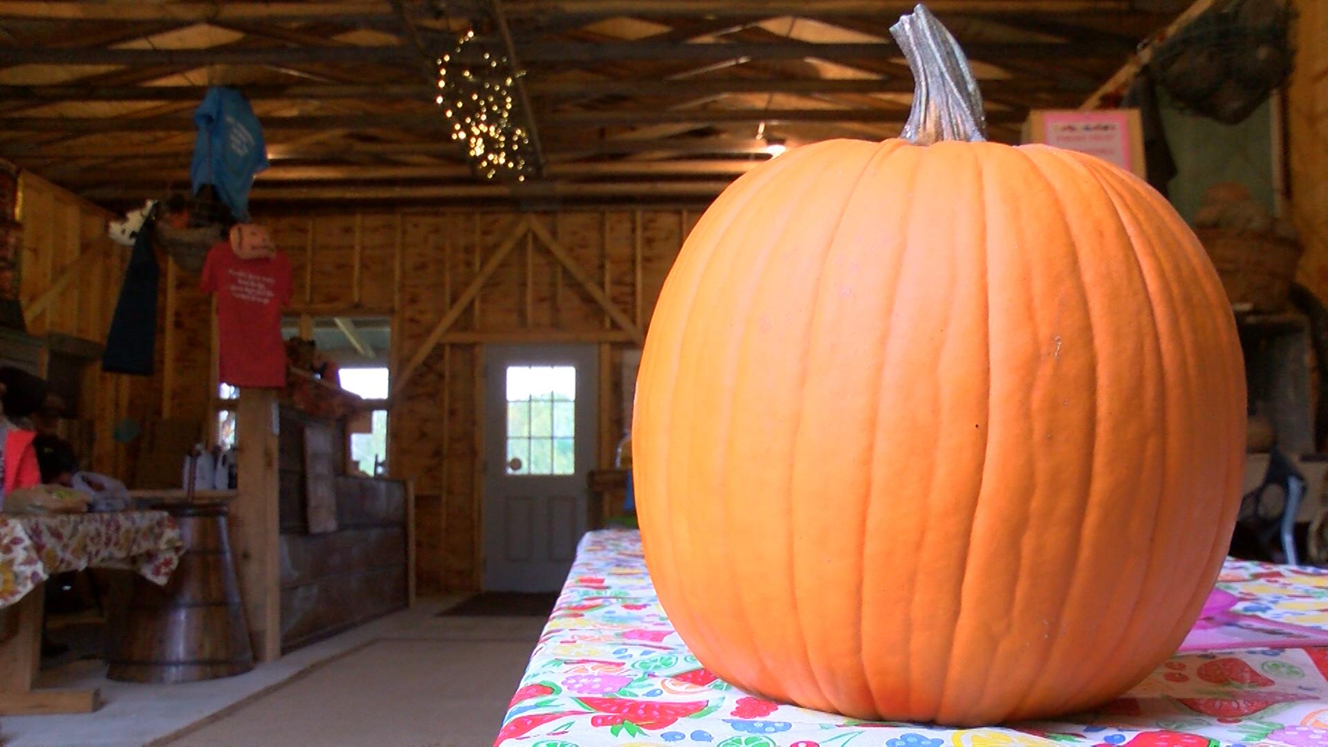 Pumpkins 1_1508112932518.jpg