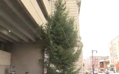 tree_1511299471198.PNG