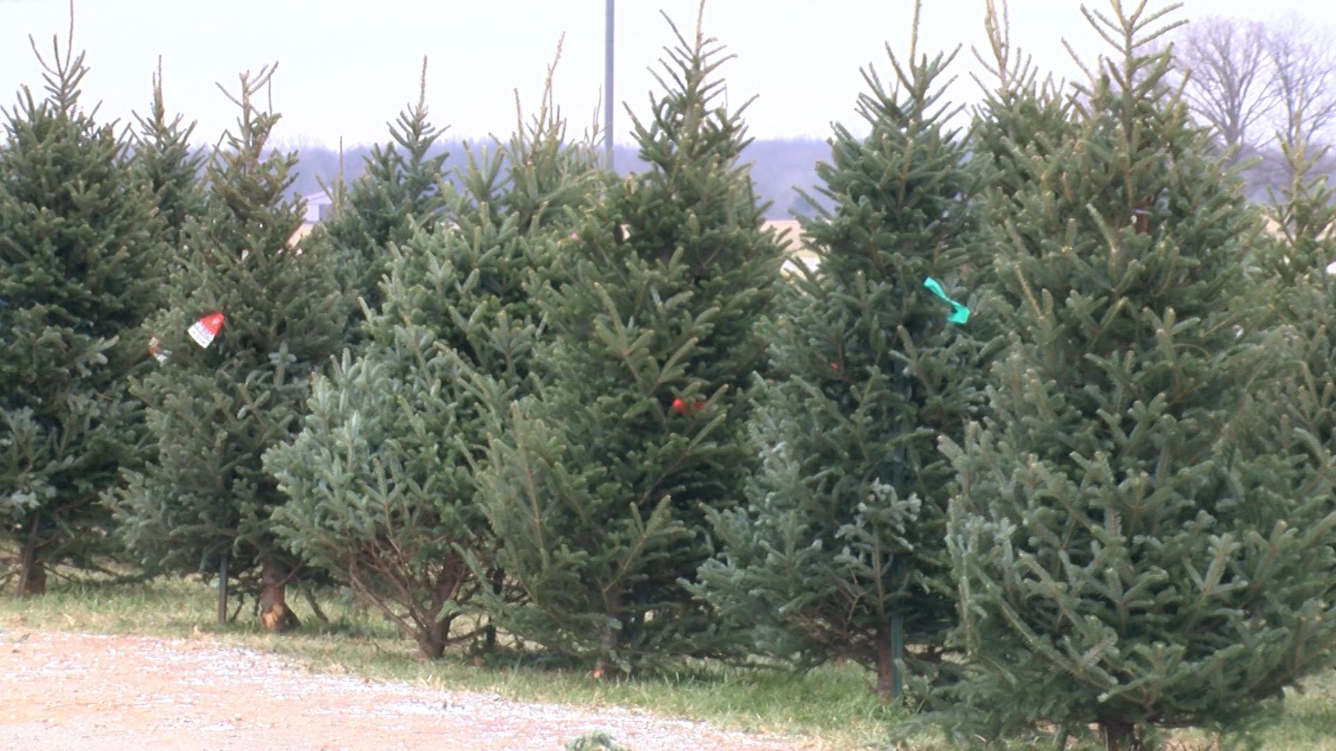 Christmas Trees_1512870025989.jpg