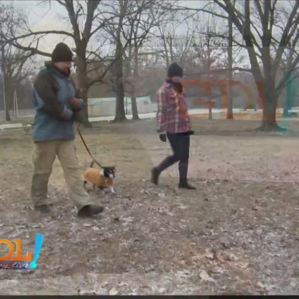 Good Day Live, Pet Winter Safety