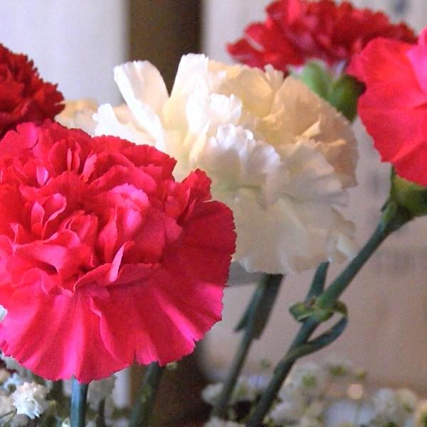 FLOWERS_1518562450730.jpg
