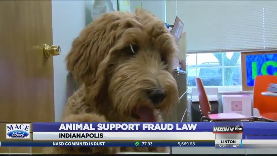 Support Animals Fraud Law