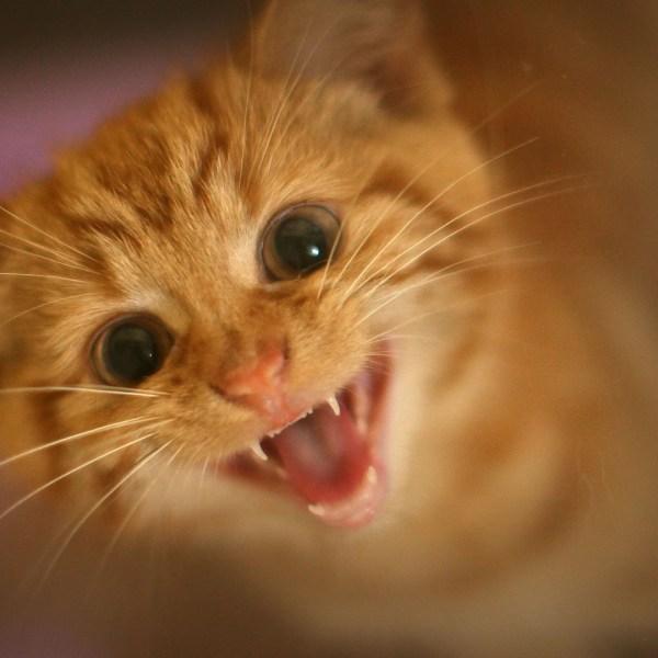Kitten, kitty, cat, baby cat60201897-159532