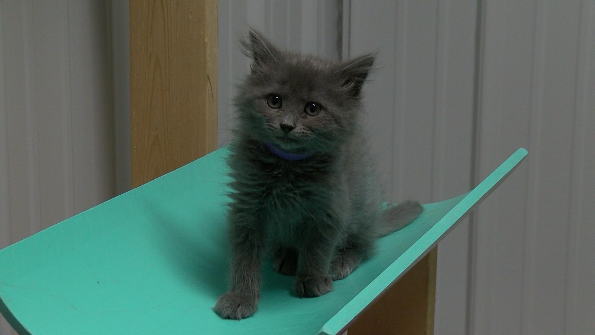 kitten shower_1524516701141.jpg.jpg