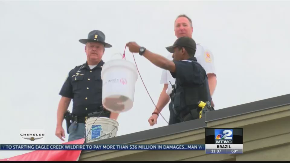 Cop on a Roof Results