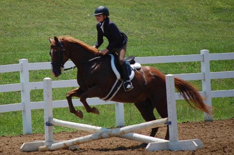HORSE 3_1531171032189.jpeg.jpg