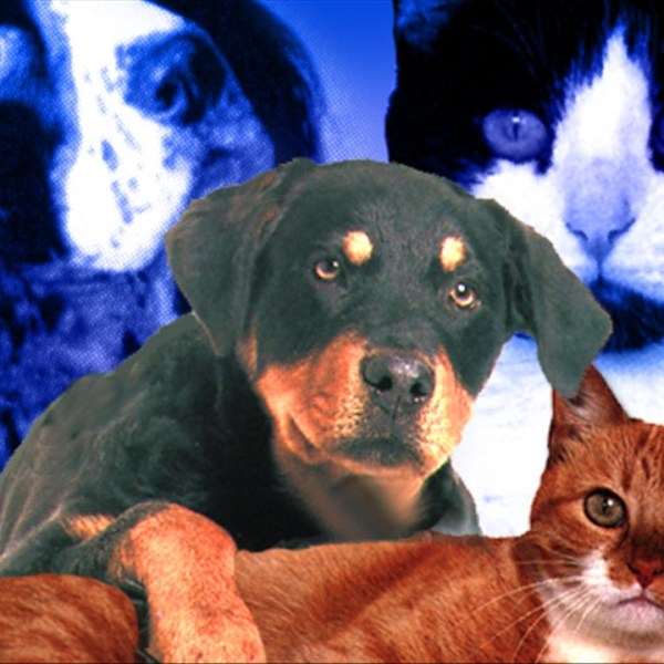 cats dogs_1536801504379.jpg.jpg