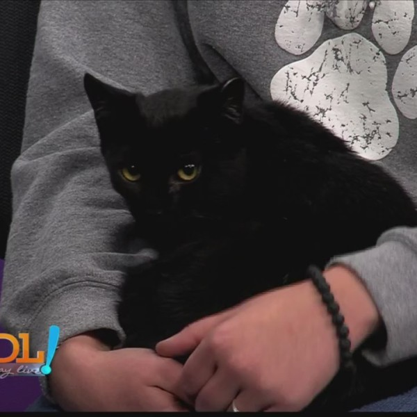 Good Day Live, Pet of the Week