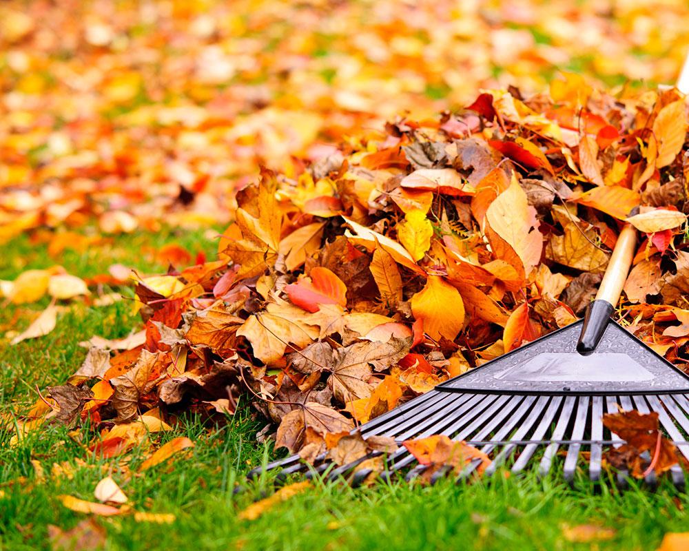 leaf pickup_1542137626221.jpg.jpg