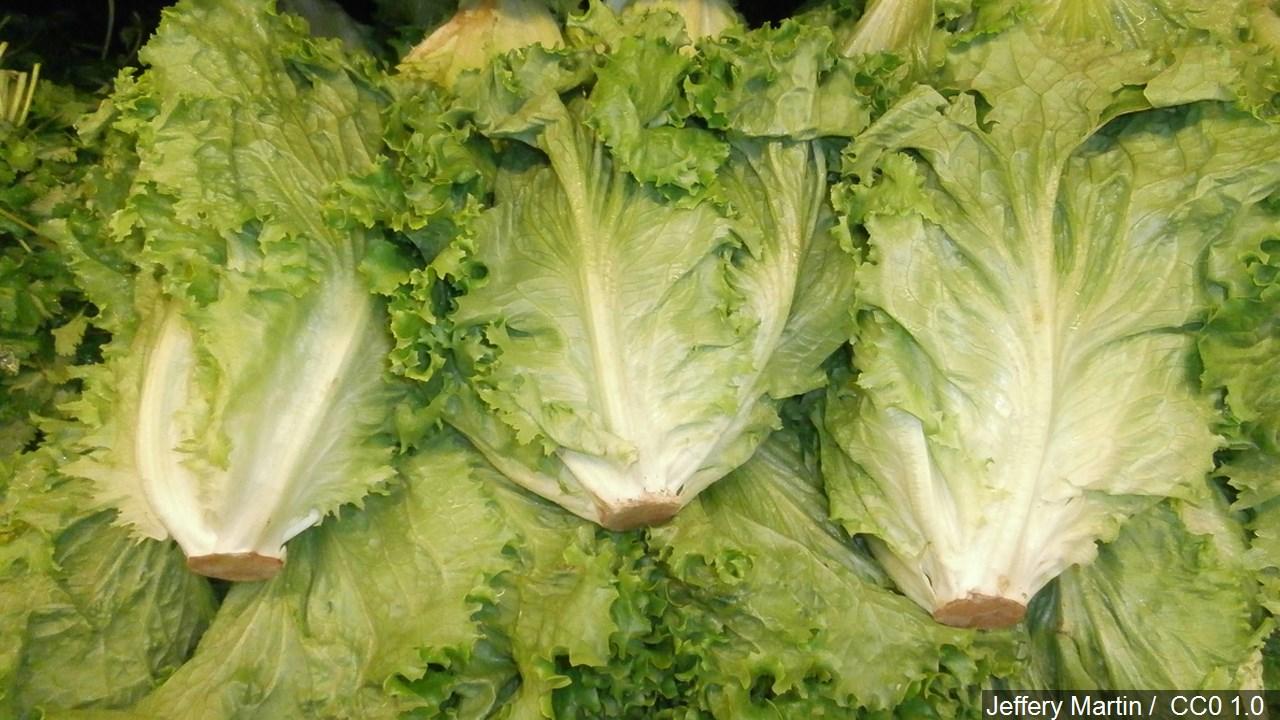 lettuce_1543347357428.jpg