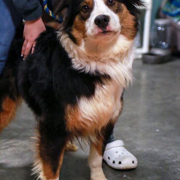 puppy 2_1549503840350.jpg.jpg