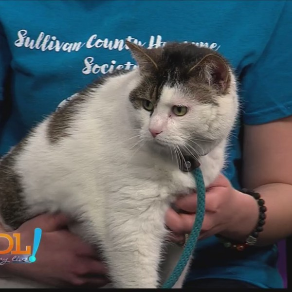 Good Day Live, Pet of week