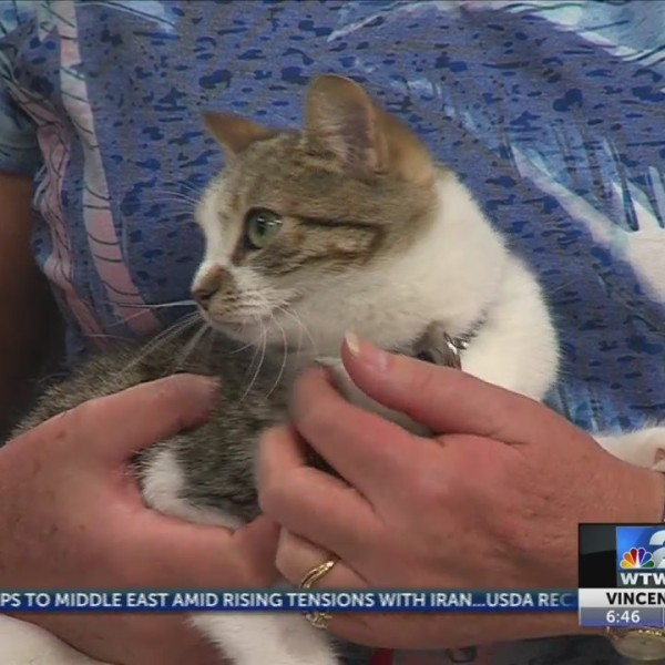 WTWO Today Pet of the Week 5/24/2019