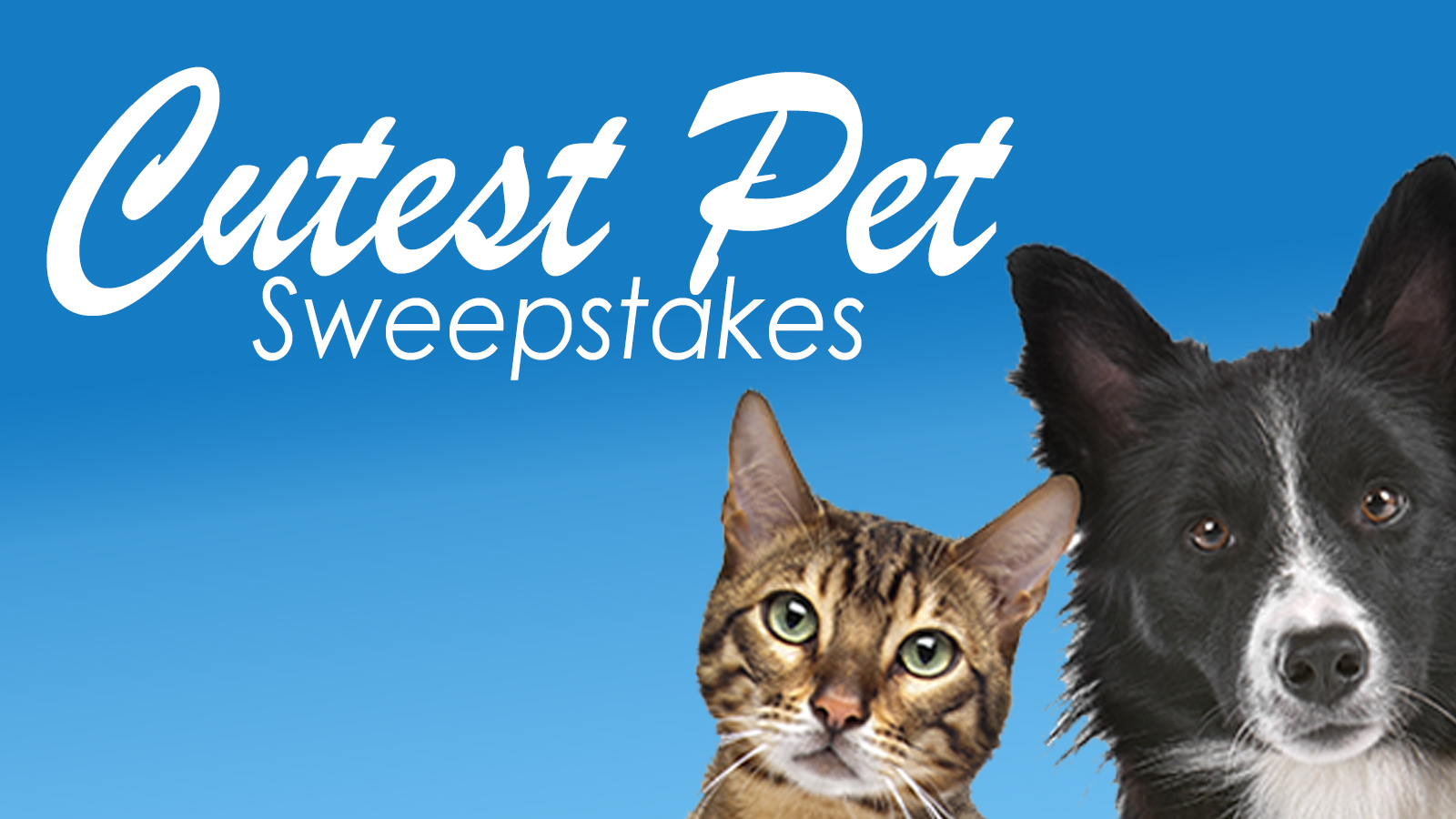 Cutest Pet Photo Sweepstakes 2019